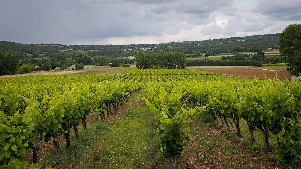 Vineyards in Luberon