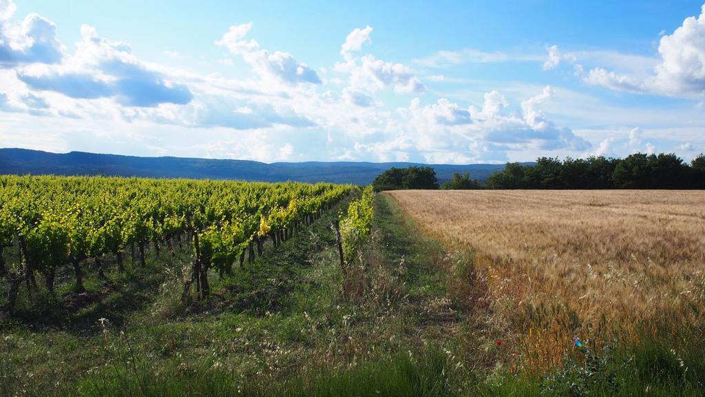 Provence Vineyards