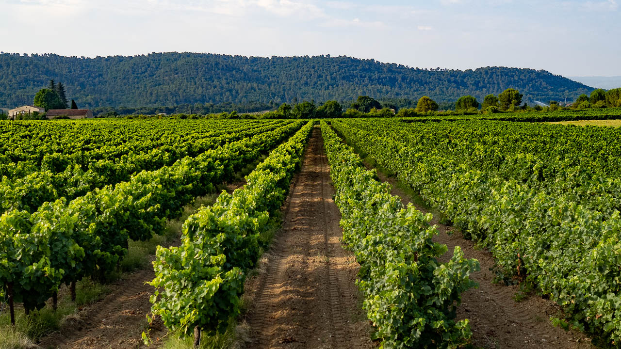 Rows-of-vines-7252227