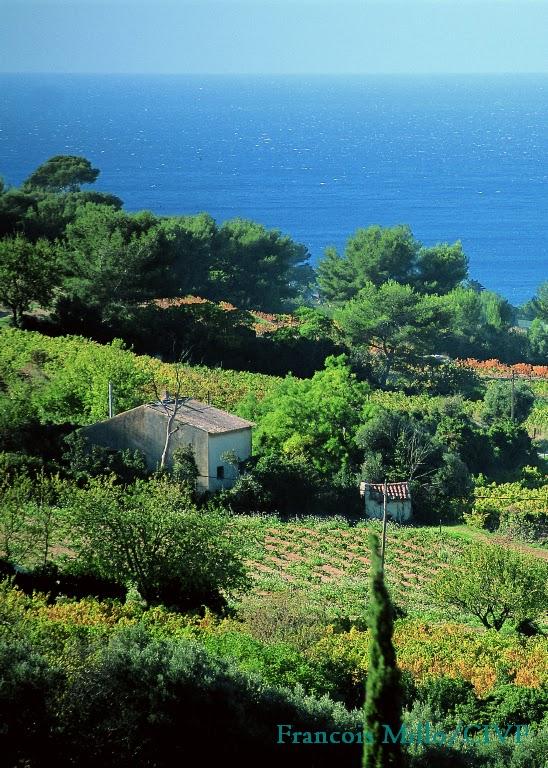 Cotes de Provence La Londe 03