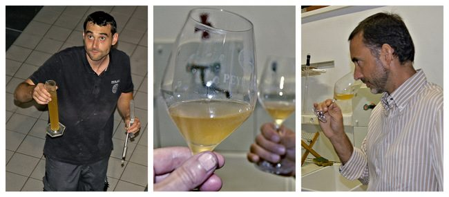 Tasting the latest vintage from Chateau de Peyrassol