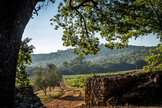Photo of Chateau Peyrassol vineyards